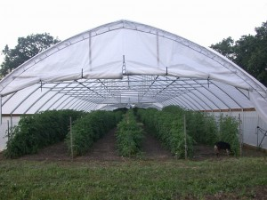 Hoop house at Tantre