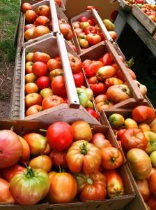 Gorgeous farm tomatoes!